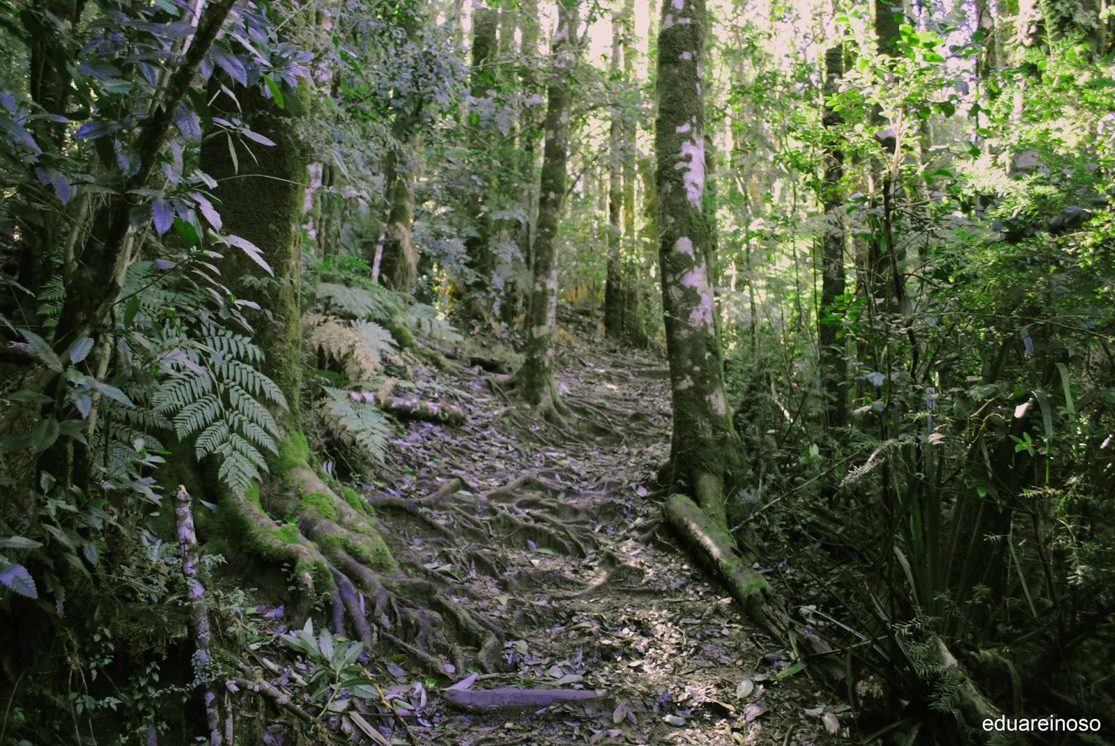 Ecorregión Bosque Valdiviano