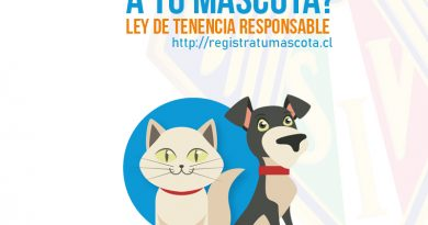 Ley Cholito: inscribe a tu mascota