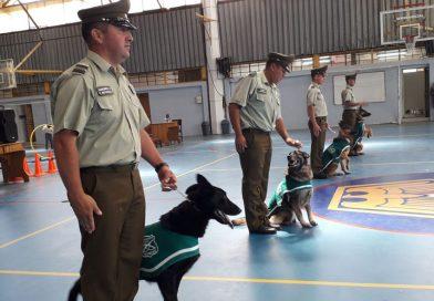 Escuadrón Canino de  Carabineros de Chile